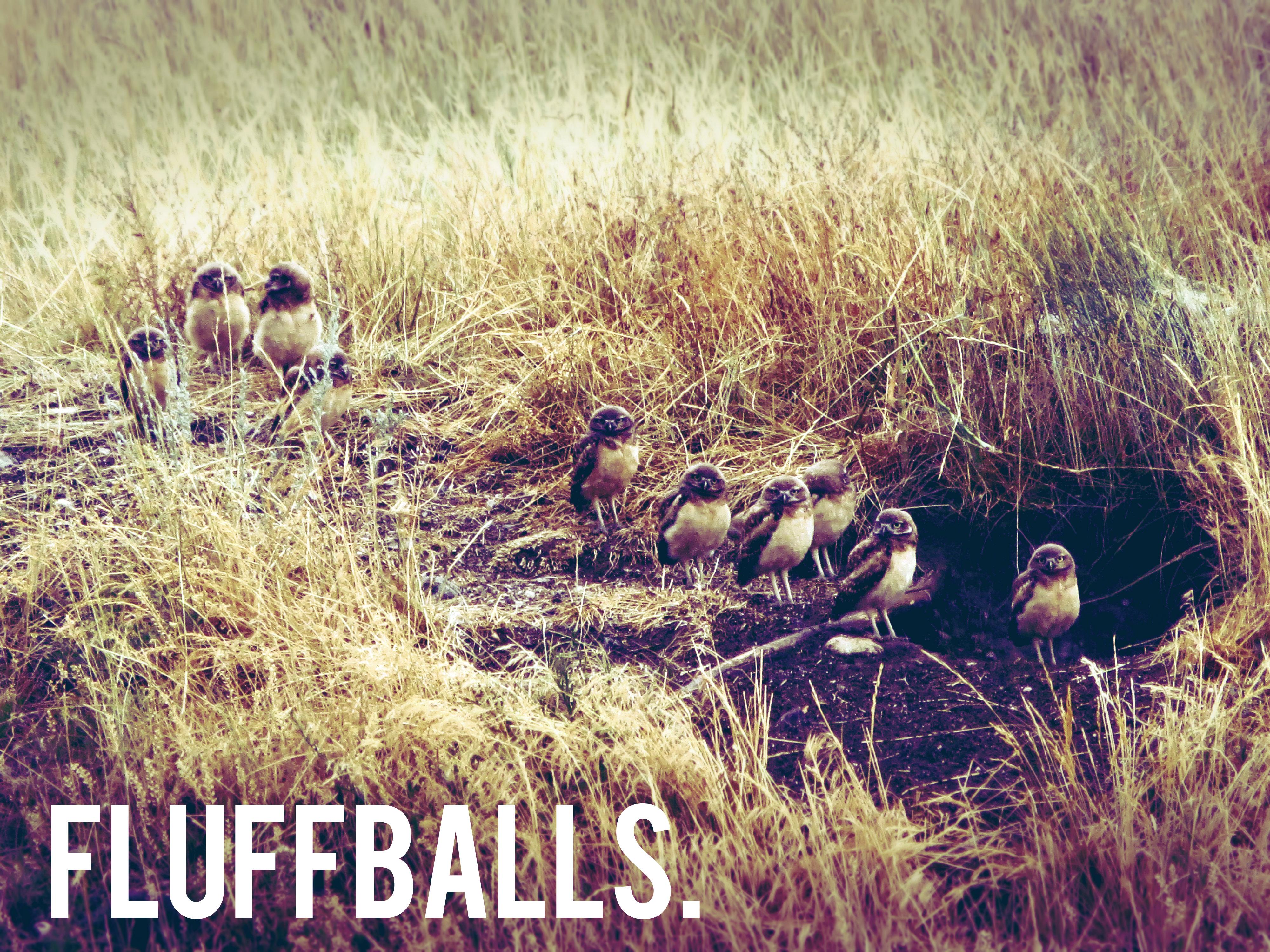 fluffballs